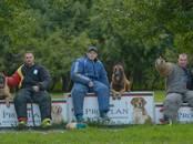 Собаки, щенки Занятия, тренировки, цена 800 рублей, Фото
