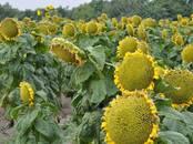 Сельское хозяйство Семена и рассада, цена 1 234 рублей, Фото