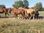 Животноводство,  Сельхоз животные Лошади, ослы, др., цена 5 рублей, Фото