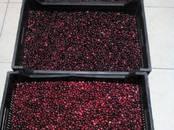 Продовольствие Ягоды, цена 230 рублей/кг., Фото