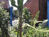 Домашние растения Лечебные растения, цена 500 рублей, Фото