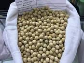 Сельское хозяйство Семена и рассада, цена 25 000 рублей, Фото