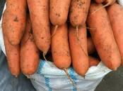 Продовольствие,  Овощи Картофель, цена 17 рублей/кг., Фото