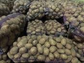 Продовольствие,  Овощи Картофель, цена 9.50 рублей/кг., Фото