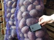 Продовольствие,  Овощи Картофель, цена 10 рублей/кг., Фото