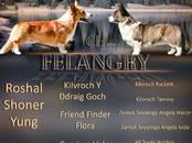 Собаки, щенки Вельш корги кардиган, Фото