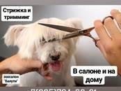 Ветеринария Другое, цена 500 рублей, Фото