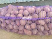Продовольствие,  Овощи Картофель, цена 10.50 рублей/кг., Фото