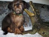 Собаки, щенки Неизвестная порода, цена 20 000 рублей, Фото