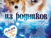Собаки, щенки Вельш корги пемброк, цена 45 рублей, Фото