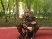 Собаки, щенки Занятия, тренировки, цена 1 000 рублей, Фото