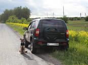 Chevrolet Niva, цена 200 000 рублей, Фото
