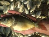 Рыбки, аквариумы Разное, цена 120 рублей, Фото