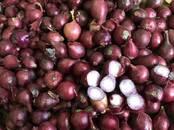Продовольствие,  Овощи Лук, цена 15 рублей/кг., Фото