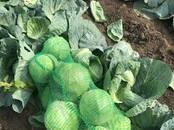 Продовольствие,  Овощи Капуста, цена 9 рублей/кг., Фото