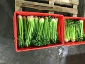 Продовольствие,  Овощи Сельдерей, цена 40 рублей/шт., Фото