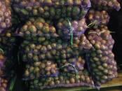 Продовольствие,  Овощи Картофель, цена 6 рублей/кг., Фото