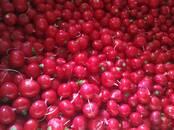 Продовольствие,  Овощи Редис, цена 50 рублей/кг., Фото