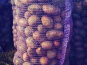 Продовольствие,  Овощи Картофель, цена 7 рублей/кг., Фото