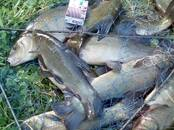 Продовольствие Рыба и рыбопродукты, цена 160 рублей/кг., Фото