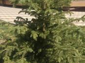 Квартиры,  Ростовскаяобласть Ростов-на-Дону, цена 5 613 000 рублей, Фото