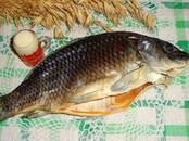 Продовольствие Рыба и рыбопродукты, цена 280 рублей/кг., Фото
