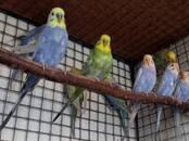 Попугаи и птицы Попугаи, цена 3 000 рублей, Фото
