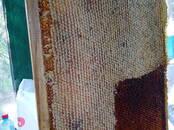 Продовольствие Мёд, цена 80 рублей/кг., Фото