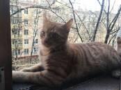 Кошки, котята Беспородная, цена 10 рублей, Фото