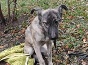 Собаки, щенки Беспородная, цена 1 000 рублей, Фото
