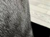 Женская одежда Шубы, цена 59 000 рублей, Фото