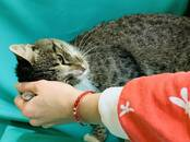 Кошки, котята Беспородная, цена 1 рублей, Фото