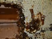Продовольствие Мёд, цена 119 рублей/кг., Фото