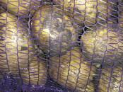 Продовольствие,  Овощи Картофель, цена 7.50 рублей/кг., Фото
