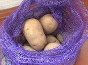 Продовольствие,  Овощи Картофель, цена 9 рублей/кг., Фото