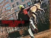Собаки, щенки Занятия, тренировки, цена 300 рублей, Фото