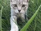 Кошки, котята Неизвестная порода, цена 1 рублей, Фото