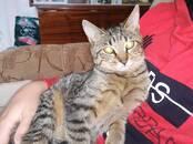 Кошки, котята Неизвестная порода, цена 100 рублей, Фото