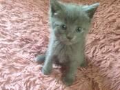 Кошки, котята Неизвестная порода, цена 500 рублей, Фото