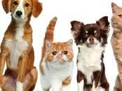 Ветеринария Ветеринары и ветеринарные клиники, Фото