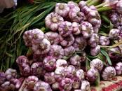 Продовольствие,  Овощи Чеснок, цена 100 рублей/кг., Фото
