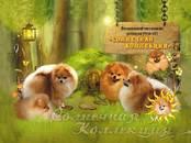 Собаки, щенки Померанский шпиц, цена 30 000 рублей, Фото