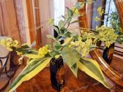 Квартиры,  Санкт-Петербург Другое, цена 50 000 рублей/мес., Фото