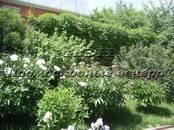 Дачи и огороды,  Московская область Минское ш., цена 4 400 000 рублей, Фото