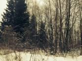 Земля и участки,  Ярославская область Переславль-Залесский, цена 350 000 рублей, Фото