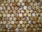 Продовольствие Мясо птицы, цена 100 рублей/кг., Фото