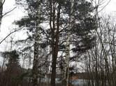 Земля и участки,  Московская область Истринский район, цена 5 990 000 рублей, Фото
