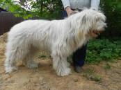 Собаки, щенки Южнорусская овчарка, цена 40 000 рублей, Фото