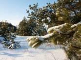 Земля и участки,  Рязанская область Другое, цена 1 000 000 рублей, Фото