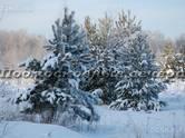 Земля и участки,  Владимирская область Петушки, цена 150 000 рублей, Фото